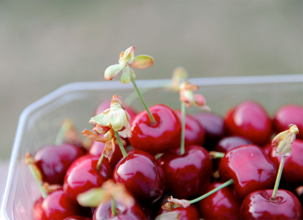 cherries-with-flowers.jpg
