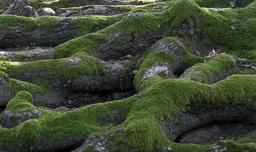 rouboku-roots1.jpg