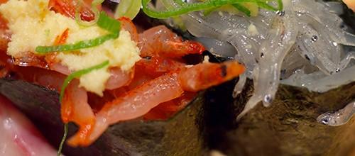 A plate of sushi with fresh shirasu