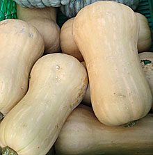butternutsquash1.jpg