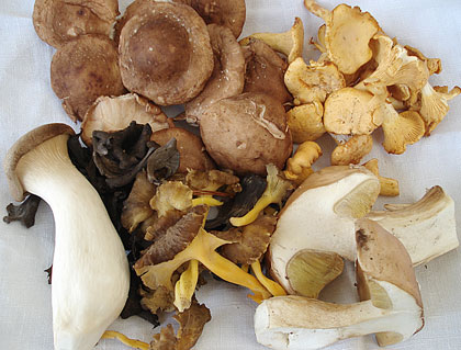 mushrooms1.jpg