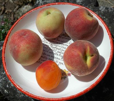 peaches_nikon_d70s.jpg