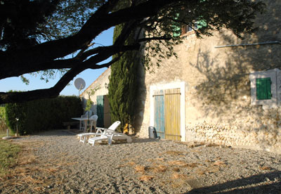 provence_violes1.jpg