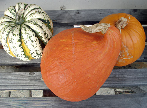 wintersquash1.jpg